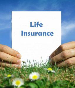 life insurance daisies